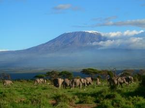 Mount kilimanjaro climbing trips