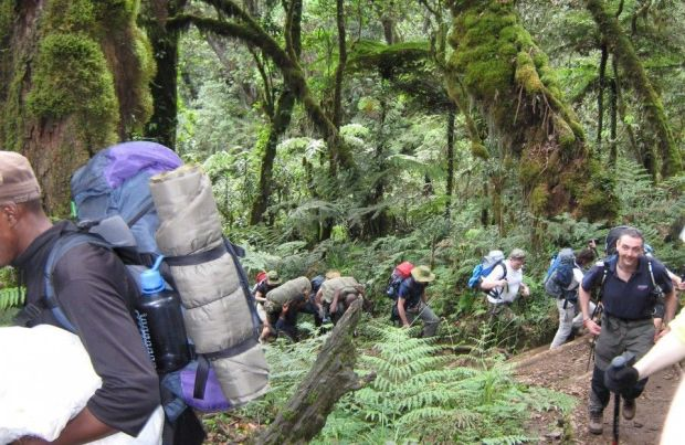kilimanjaro_trekking rainforest
